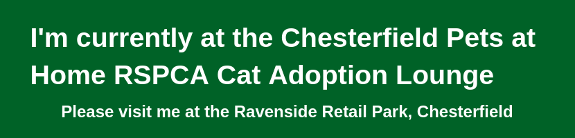 Rehome A Cat Rspca Chesterfield North Derbyshire Branch