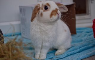 Rabbits Archives Rspca Chesterfield North Derbyshire Branch